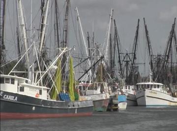 Texas shrimp industry – fisherynation com