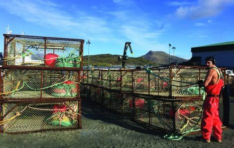 Snow crab up, king crab quota down in Bering Sea
