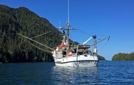 Why Does Halibut Cost So Much?