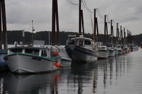 Columbia River reforms – fisherynation com