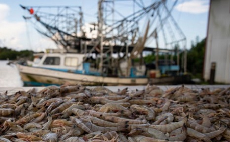 Gulf Coast seafood industry slammed by freshwater from floods, states requesting federal fishery disaster funding